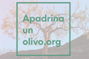 Logo Apadrinaunolivo.org