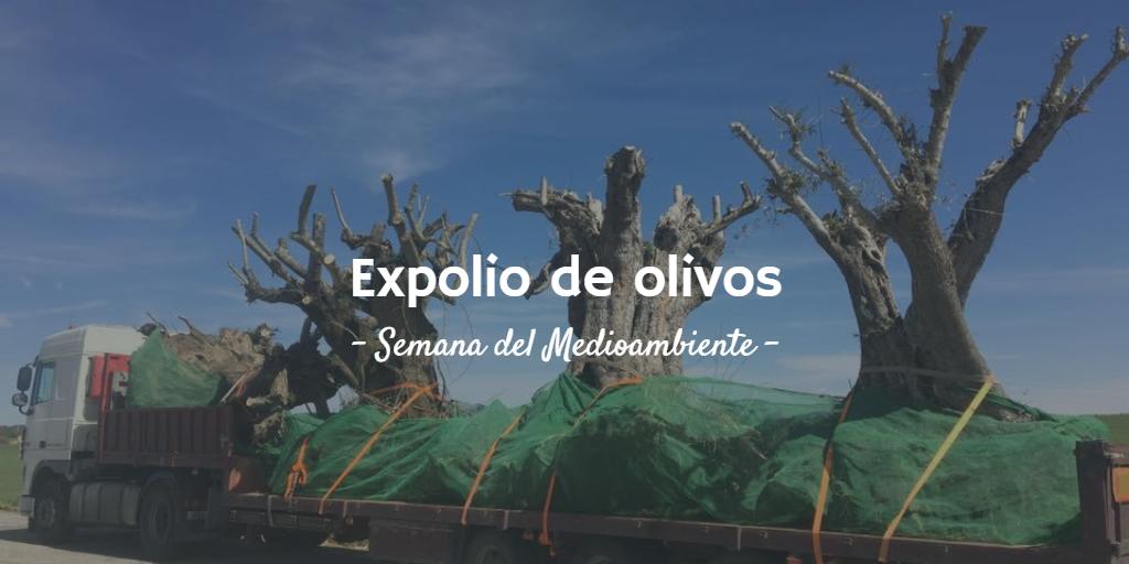 Imagen destacada del artículo ¿Qué es el expolio de olivos?