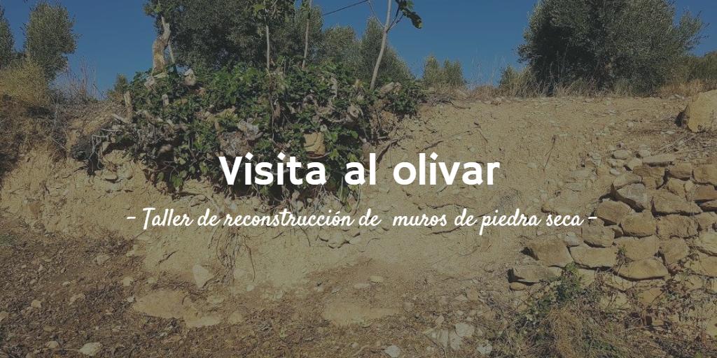 Imagen destacada del artículo la Visita al olivar. Taller de reconstrucción de muros de piedra seca