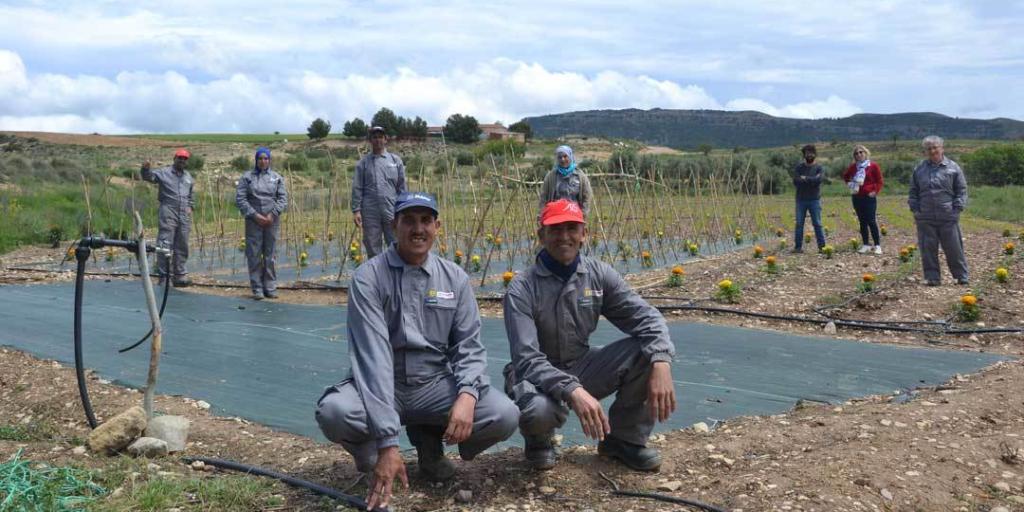 Conservas vegetales de Alacón