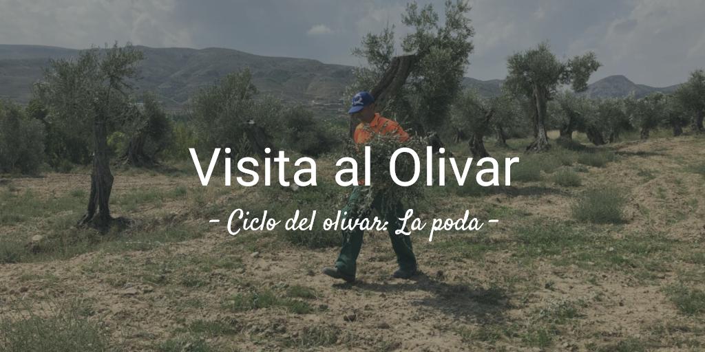 imagen artículo 2ª Visita al olivar 2019. Temporada de poda